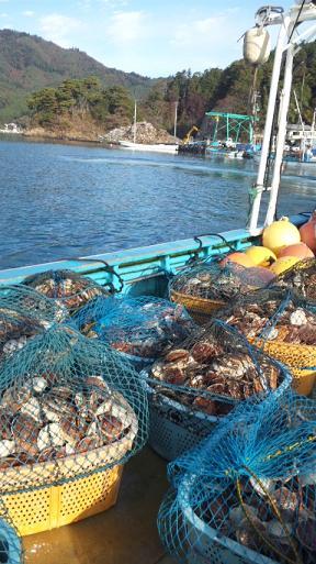 石巻市雄勝町でのホタテ貝の養殖再開
